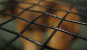 cordaje de squash -powernick-19